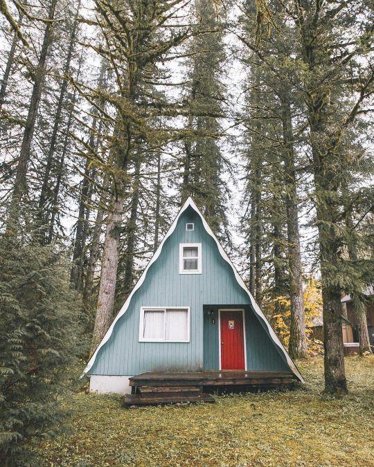 Chalés em floresta boreal                                                       …