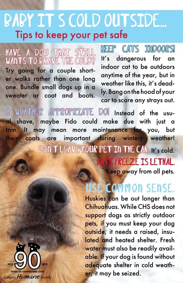 General Pet Care