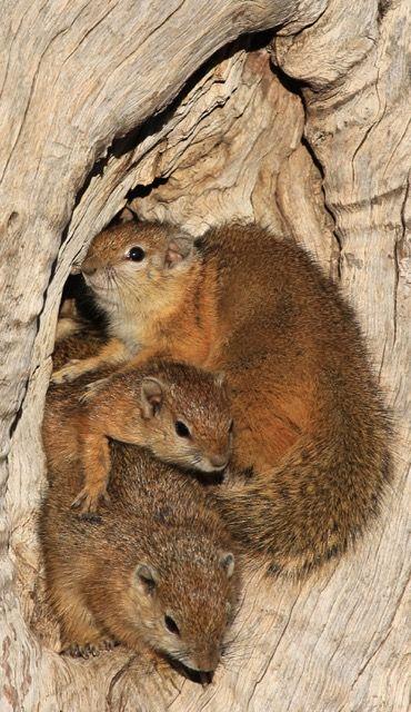 Cosy Cuddle