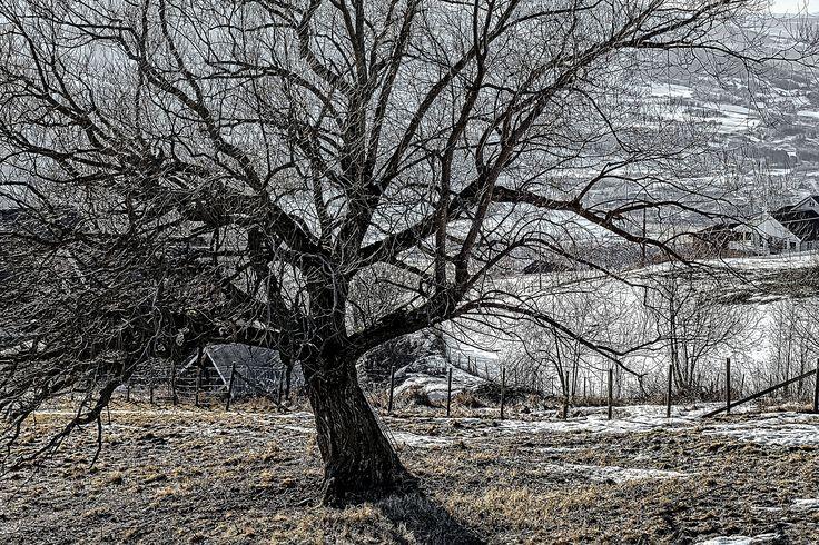 Oak Detail by Sigurd Rage on 500px