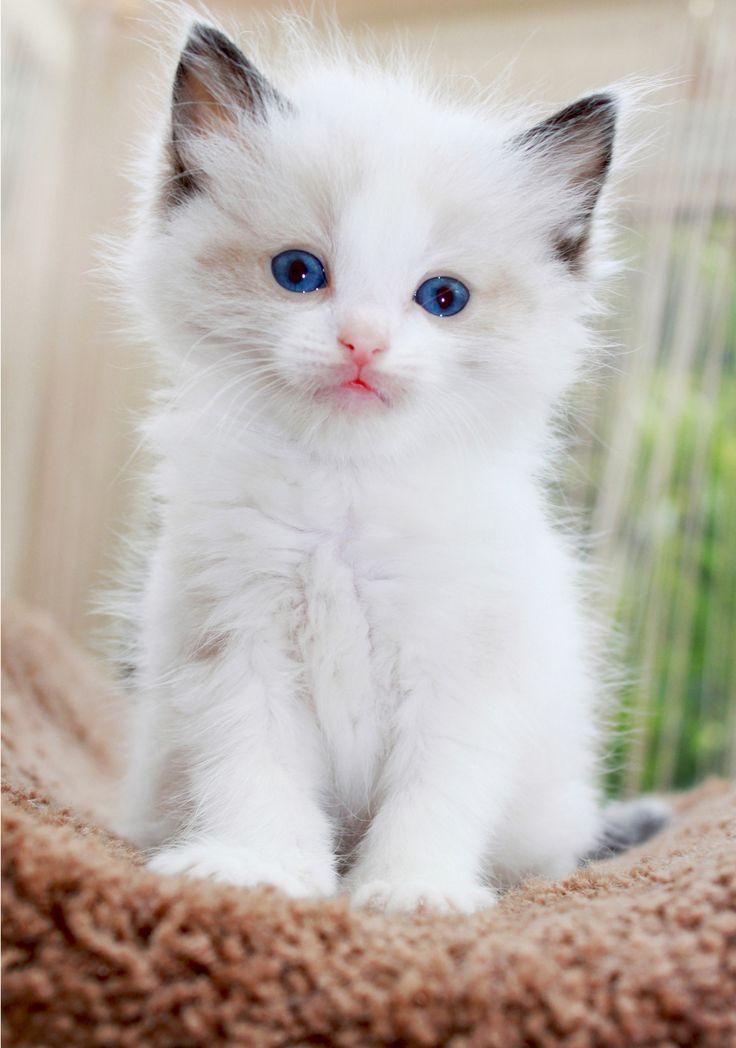 Поздравления, картинки красивых кошек с надписью