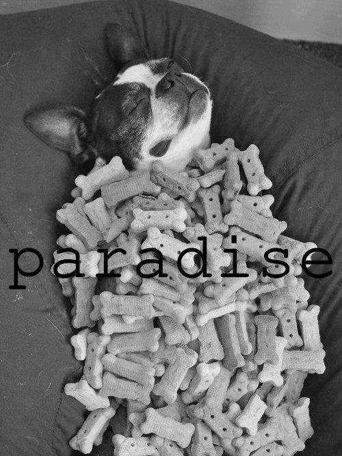 dogs' paradise