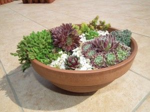 succulent bowl Kövirózsa Dekor