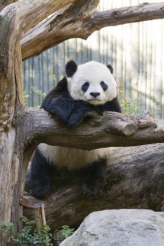サンディエゴ動物園で動物たちに癒される。サンディエゴ旅行の観光アイデア。