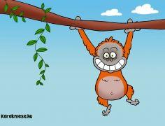 Orángután az állatkertben
