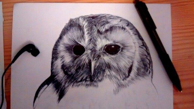 Pen and ink style wildlife art Owl drawn in Biro by Karolina Czerwinska