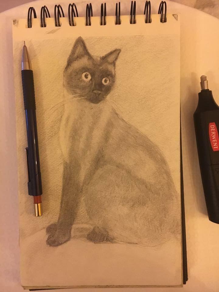 Il mio gatto, chiaroscuro