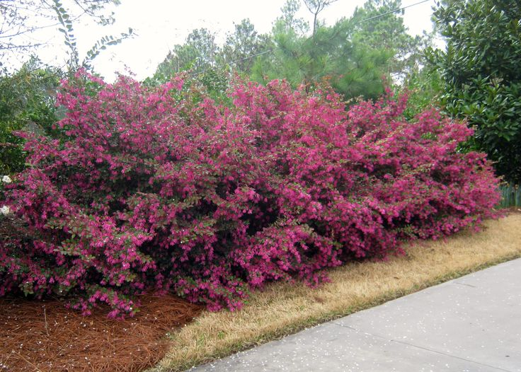 When Is The Best Time To Trim Trees And Bushes