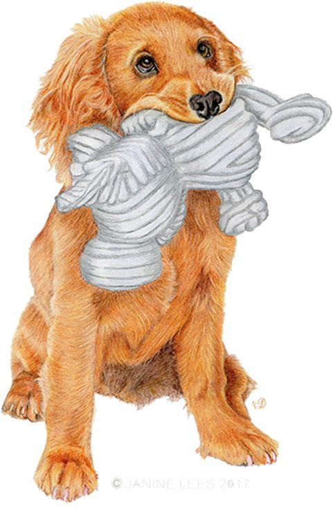 'Monty' the Cocker Spaniel Puppy by Janine Lees (2018). Coloured Pencil Portrait.