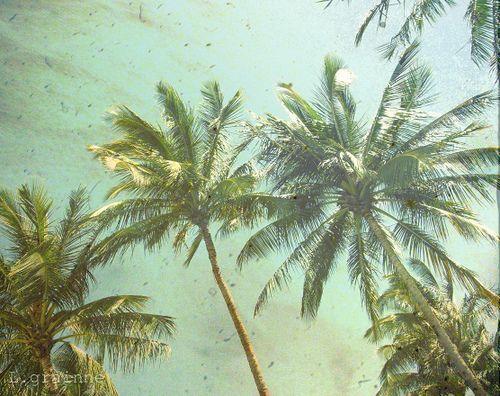 Palm Trees Tumblr Vintage