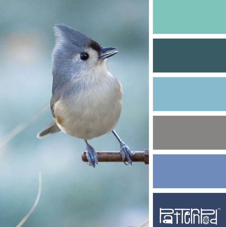 Gone away, is the Blue Bird... #patternpod #patternpodcolor #color #colorpalettes