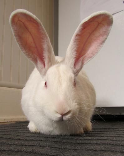 1000+ ideas about House Rabbit Society on Pinterest ...