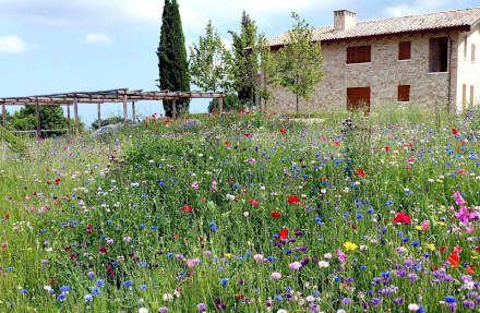 Giardini di campagna: Giardino in stile in stile Rustico di Lucio Piunti