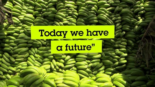 Fairtrade Deutschland visits the banana farmers of ACPROBOQUEA, a Fairtrade certified cooperative in Peru. Featuring interviews with farmers and the story of how bananas get from the fields of Peru to your store shelves.