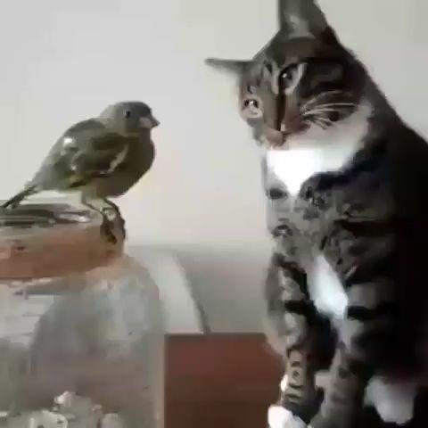 Be gentle.. Be gentle.. don't hurt the bird – animal