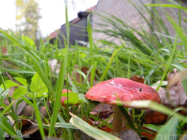 Rondje Collse Watermolen in Eindhoven  http://www.z11made.nl/2013-web.albums/rondje-colssemolen/index.html