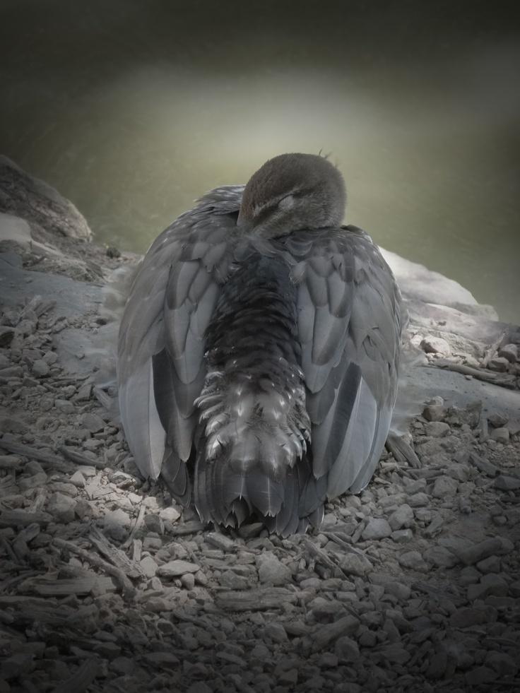 Wildlife portfolio 2012
