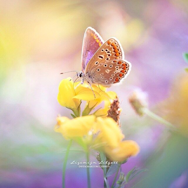 Butterfly in Holland, | Dreamy colours | rainbow  Copyright Lizemijn Libgott  https://instagram.com/lizemijn