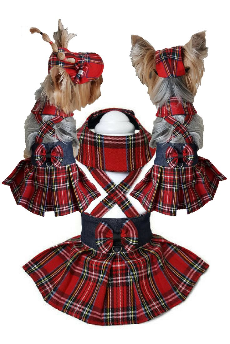 Red tartan dog clothes Tartan dog pet skirt Dog clothes small Dog clothes red Dog pet clothes Tartan dog dress Small dog clothes Dog dresses #smalldog #dogclothes ##dogdresses #smalldogclothes