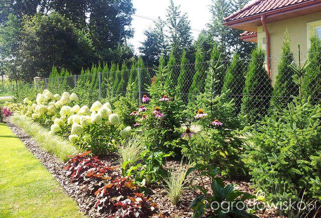 Moja codzienność - ogród Oli - strona 486 - Forum ogrodnicze - Ogrodowisko
