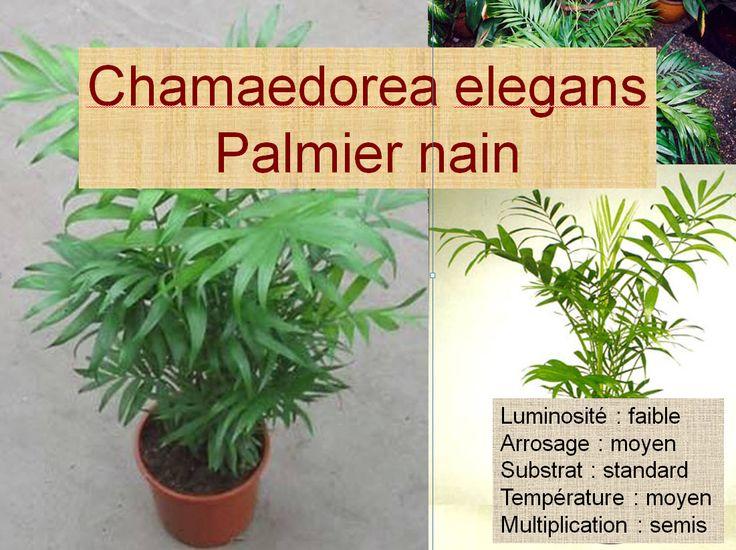 21 best horticulture mes plantes images on pinterest for Plante palmier