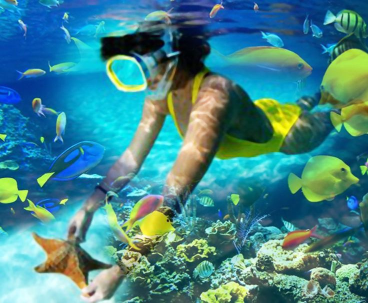 Snorkeling is a favorite activity in the #RivieraMaya because of the abundant underwater life! www.mexicorelax.com  #MexicoRelax #Snorkeling #Lifestyle