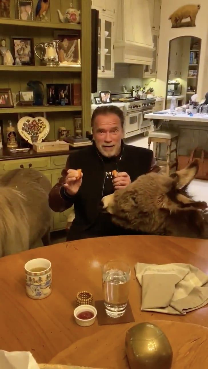 Arnold Schwarzenegger And His Pet Donkey And Pet Pony Encourage Others To Self Isolate In 2020 Arnold Schwarzenegger Arnold Schwarzenegger Muscle Schwarzenegger