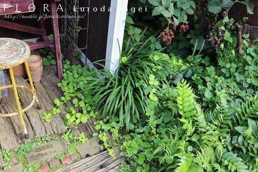 小屋に這わせたブラックベリー。。。   フローラのガーデニング・園芸作業日記
