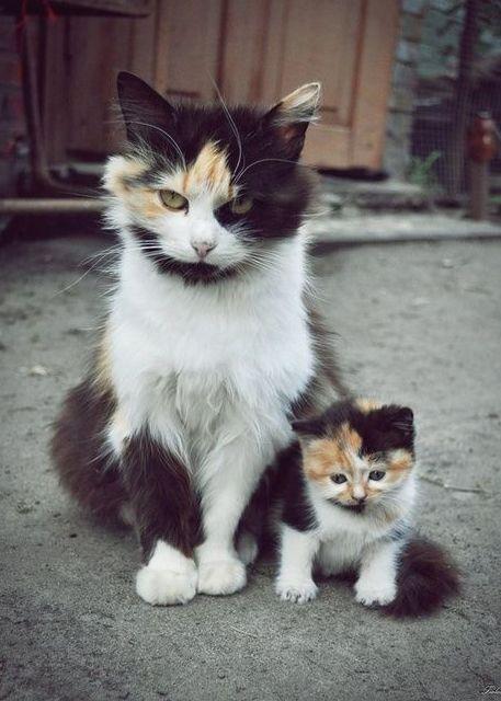 cats, un air de famille