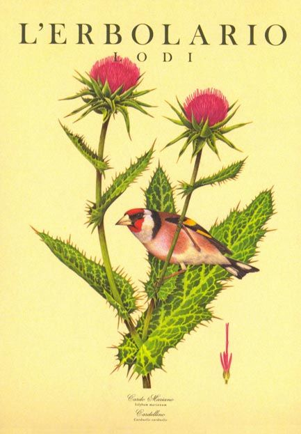 Calendario 1995 L'Erbolario - Acquerelli di Franco Testa