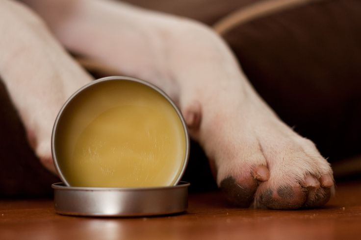 Make this DIY paw wax and snout soother to keep your dogs paws and nose safe during extreme weather conditions!