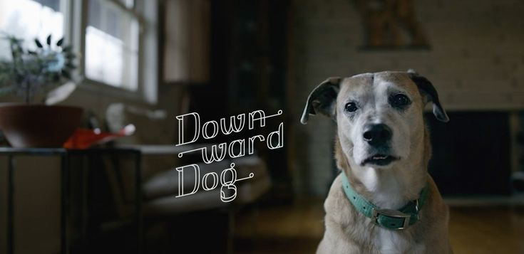 """Casting Featured Extras in Pittsburgh for New ABC TV Show """"Downward Dog"""" 