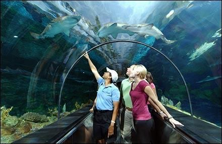Take your family or date to the nearest aquarium. And don't forget to check out the gift shop!