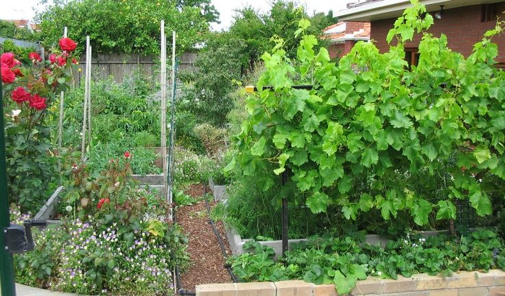 """This section details the design and construction of my garden, which I can happily claim is the very first demonstration Permaculture urban food forest in Melbourne, Victoria, Australia! By """"demons..."""