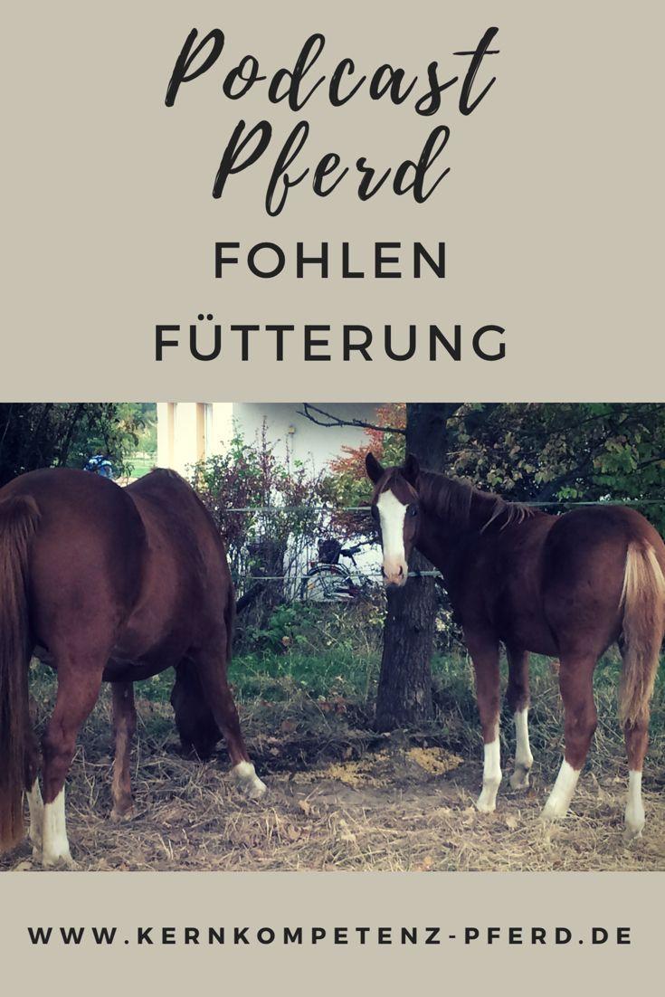 Fohlen Richtig Futtern Fohlen Partner Pferd Pferdefutter