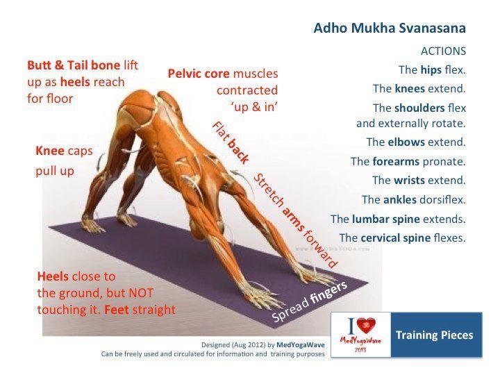 48 besten Anatomy Yoga Bilder auf Pinterest | Asana, Yoga posen und ...