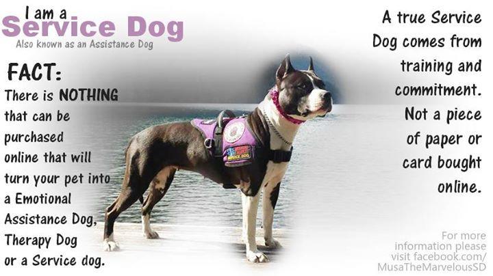 Service Dog Paperwork Laws