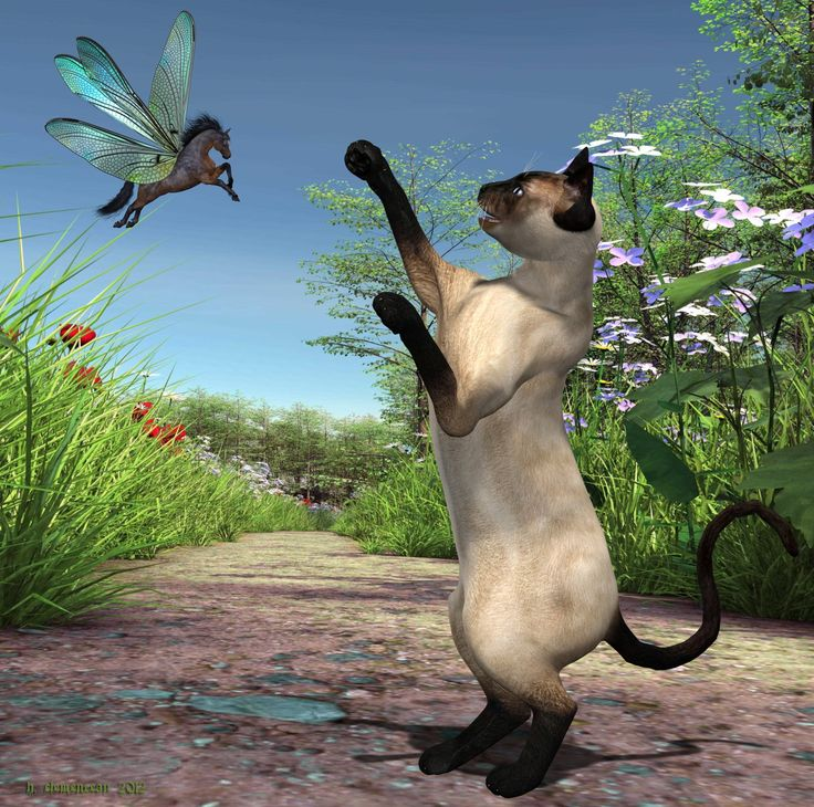 Siamese Cat and Horse Fly