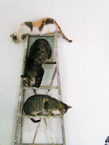 Cat Stairs II by fofurasfelinas on Flickr.