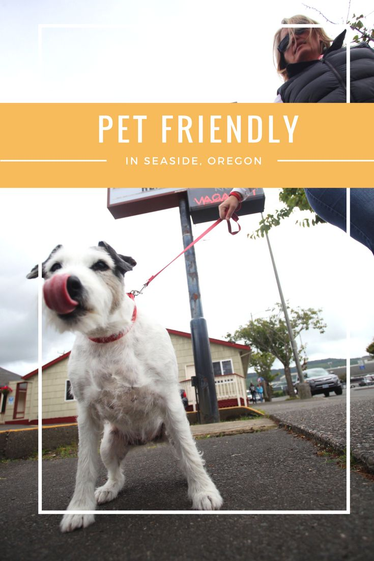 The City Center Motel's economy sized hotel rooms provide budget-conscious rates and pets are welcome! Add this to your next Coastal getaway. Seaside, Oregon is just 80 miles from Portland