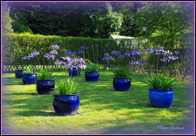 jardin d 39 agapanthes jardin b pinterest jardins philippe et photo jardin. Black Bedroom Furniture Sets. Home Design Ideas