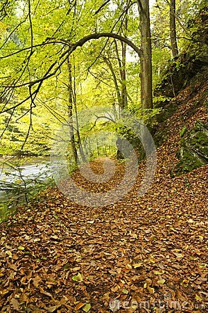 Fall leaf covered trail along river banks through forest on sunny day.