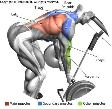 LATS -  BENT OVER BARBELL ROW WITH HEAD ON BENCH