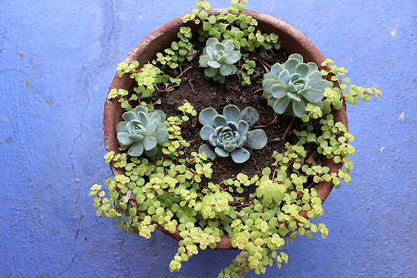 ¿Por qué cultivar plantas en casa?