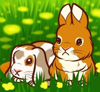 how to draw baby rabbits, baby rabbits