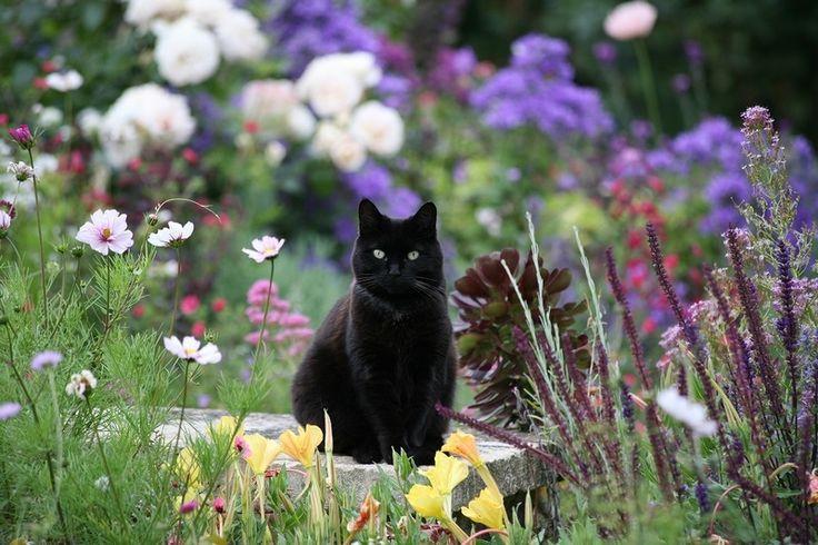 Val Bourne и Spring Cottage, органическое садоводство в Котсволду | Блог Таблица