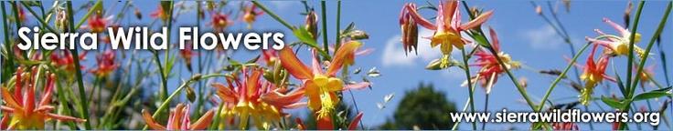 Sierra Wild Flowers - Native Plant Identification