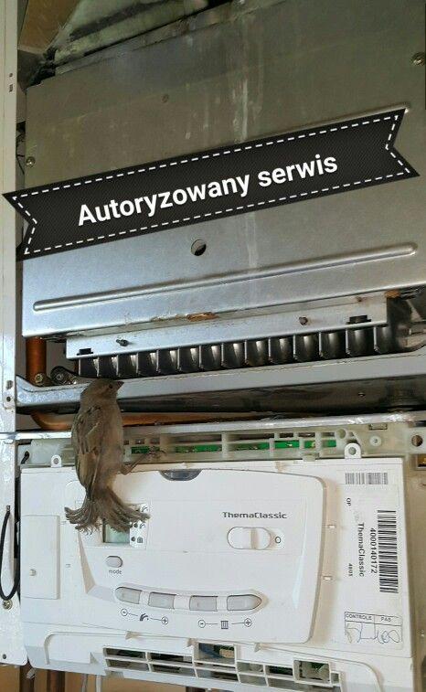 Uratowany ptaszek z przewodu spalinowego...