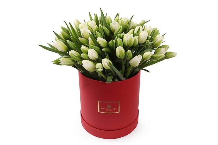 крутой Букет 101 тюльпан в коробке, белые  #Букеты #Букетывкоробке #Букетывшляпнойкоробке #Тюльпанывшляпнойкоробке,Букет101тюльпанвкоробке,белые