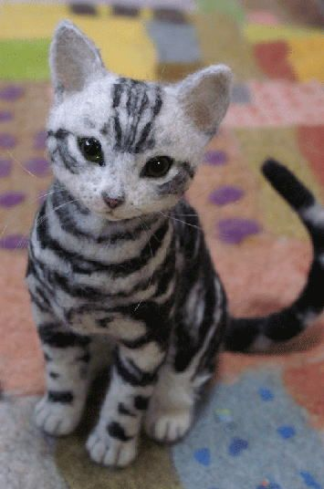 Cat with stripes